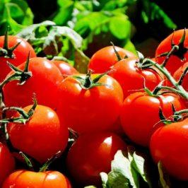 Berlin Humboldt Uni Tomaten