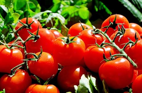2013 Desinfektionsanlage für Tomaten
