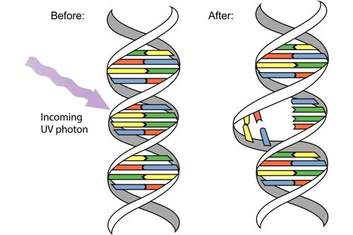 UV Wirkung auf DNA 500